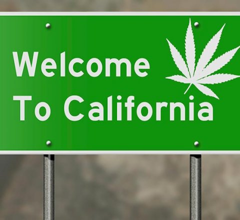 Breaking-News article about California growing eight times as much marijuana than actually consumed?