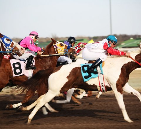Sport article about How To Bet On Horse Racing And Win