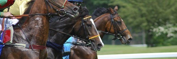 article about Building a solid horse racing treble bet
