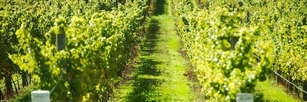 article about Visit the Best Vineyards in Europe
